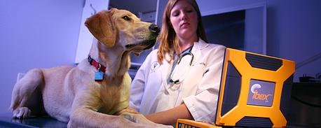 animal ultrasound