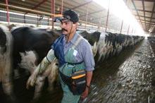 Dairy Portable Ultrasound