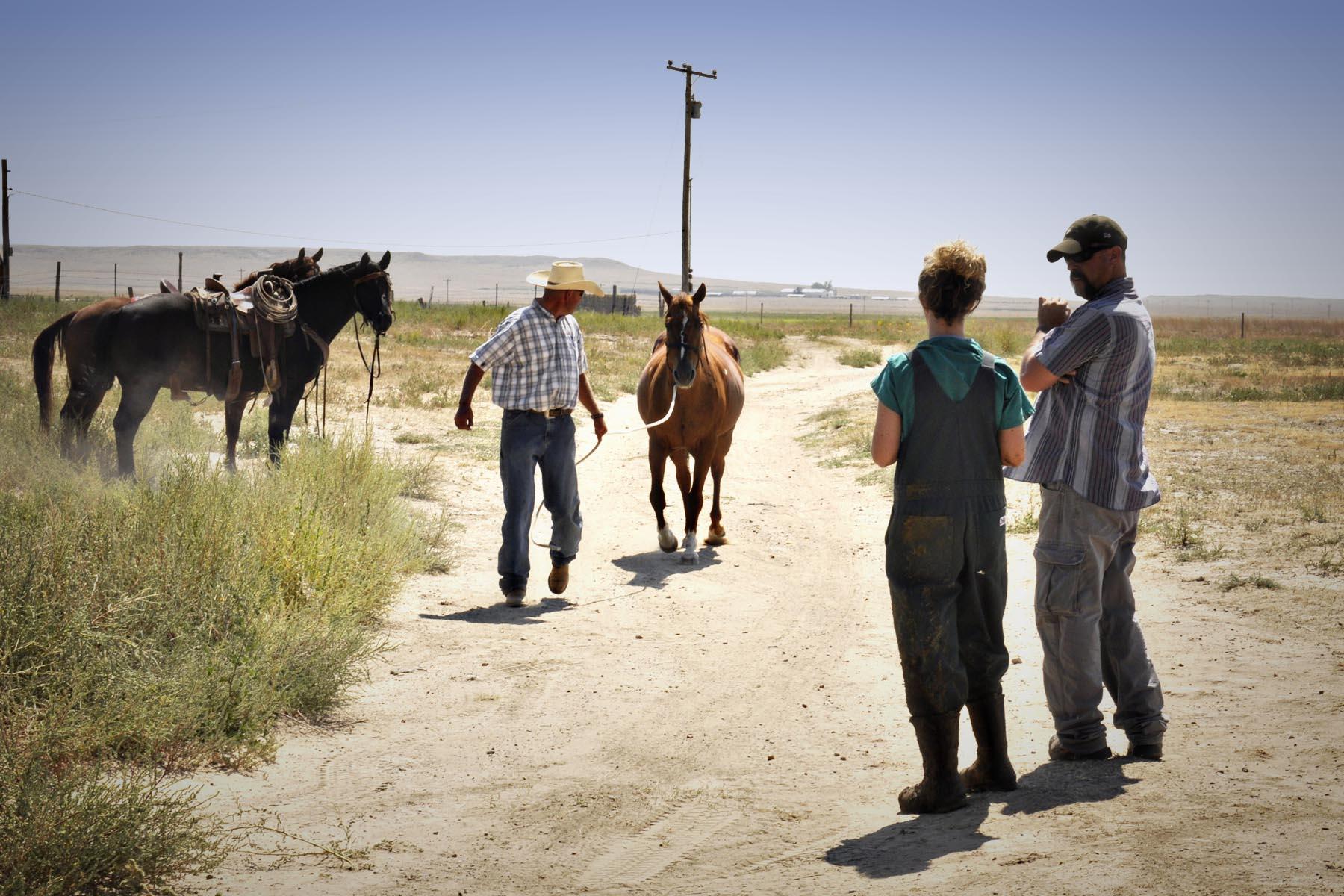 cow ultrasound, bovine ultrasound, increase revenue in veterinary practice