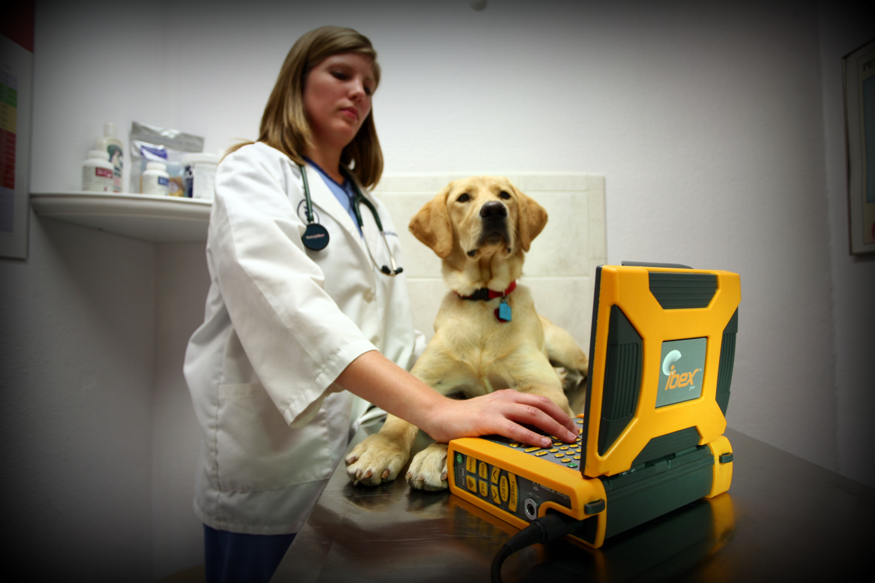 veterinarian communication, veterinary ultrasound, cow ultrasound, waterproof ultrasound