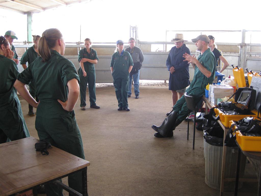 bovine ultrasound training