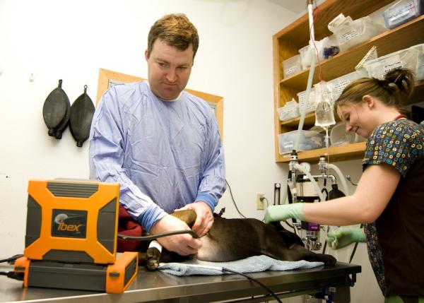 Portable Ultrasound Canine