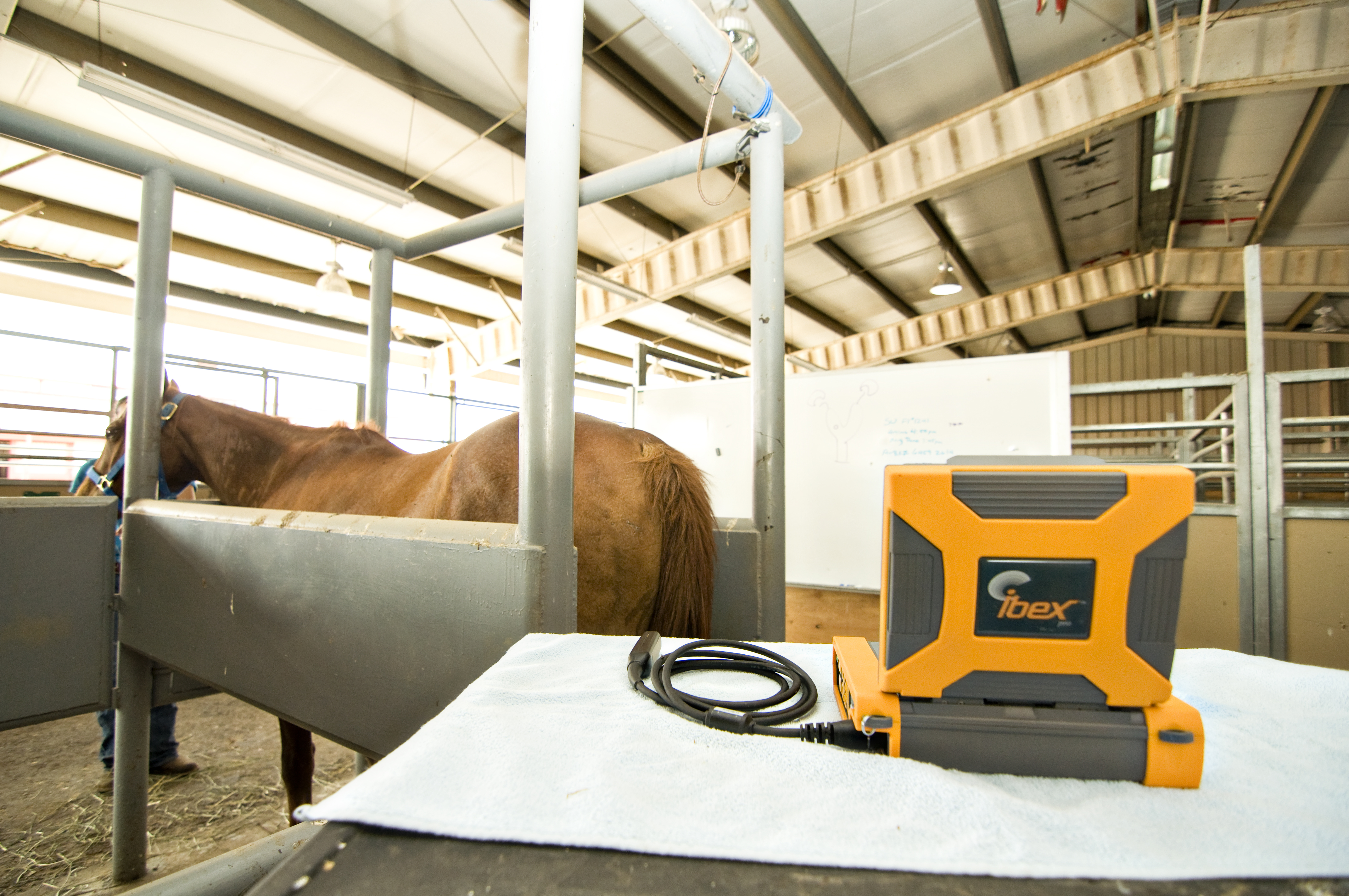 veterinary ultrasound, equine ultrasound, animal ultrasound