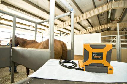 veterinary ultrasound, equine ultrasound, animal ultrasound