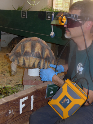 Vetrinarians At Turtle Conservancy
