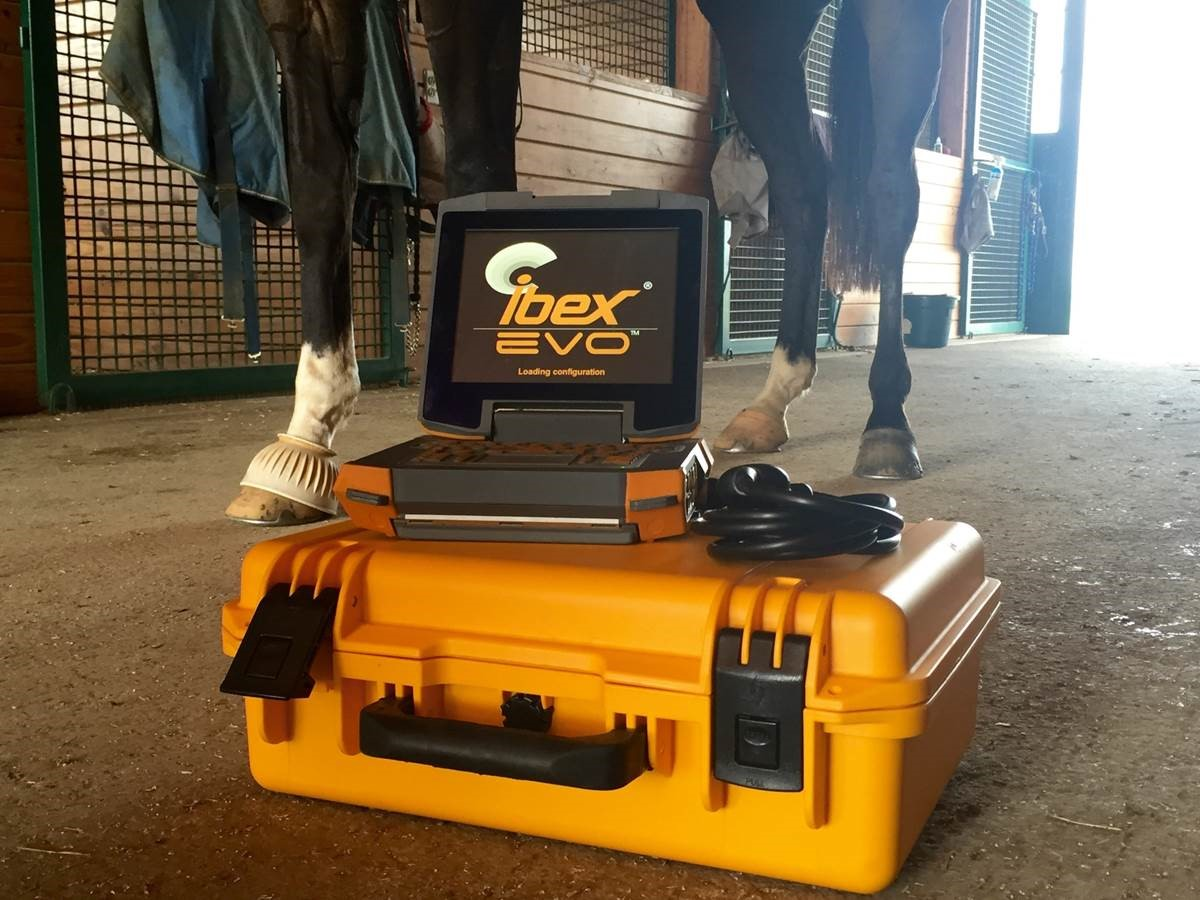 Equine Portable Veterinary Ultrasound Ibex EVO