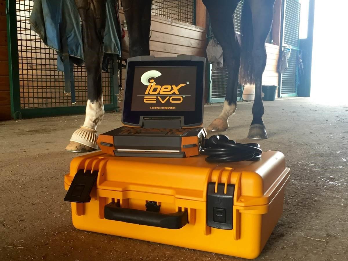 Equine Portable Veterinary Ultrasound Ibex EVO