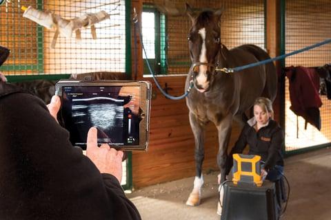 Veterinary ultrasound wireless streaming