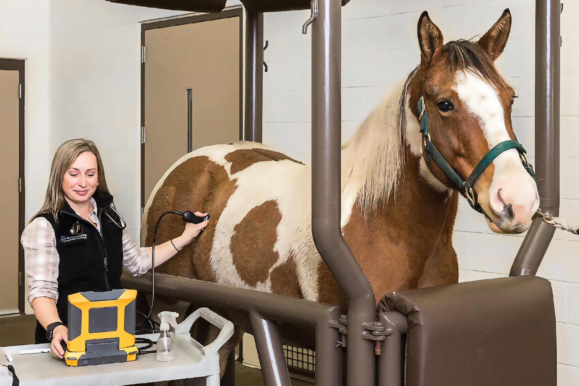 EVO II veterinary ultrasound used in top equine hospitals