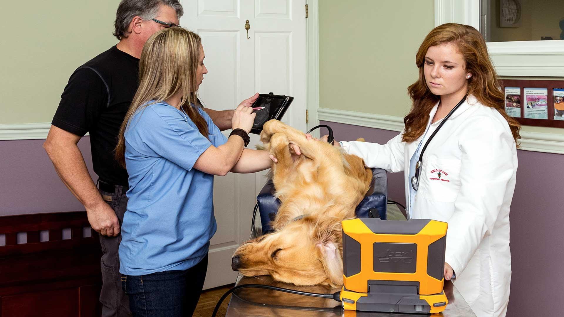 KY Small Animal Clinic 4 [iPad + screen grab] WEB.jpg