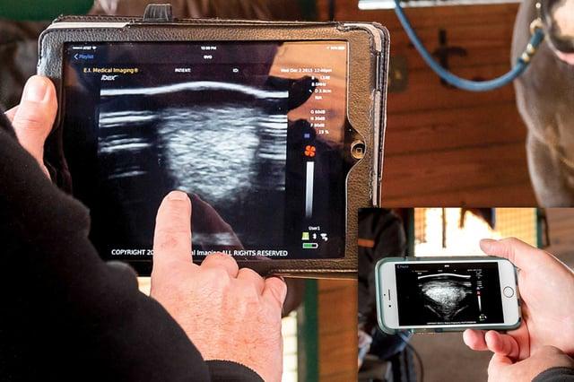 iPad + iPhone equine.jpg