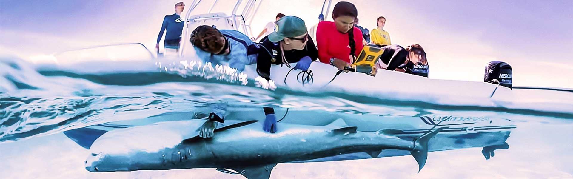 bimini-shark-lab-web-v2